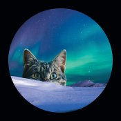 Meowthern Lights