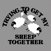 Trying To Get My Sheep Together