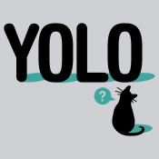 YOLO Cat