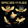Species Of Flies artwork