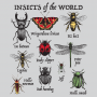 Insects Of The World artwork
