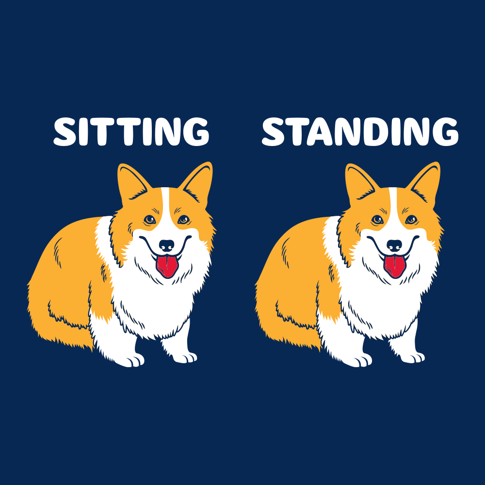 Corgi Sitting And Standing